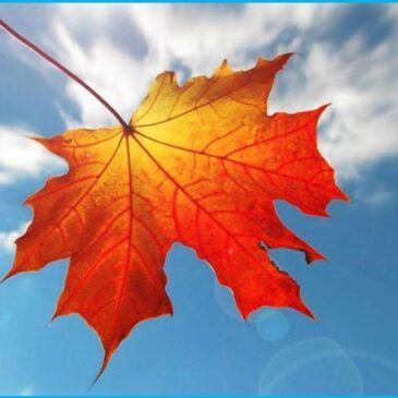 Høstdugnad 31. oktober kl. 12-16 + andre valgfrie dager